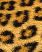 Leopardova koza